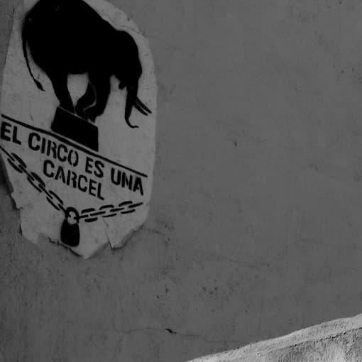 graffitti de elefante en muro