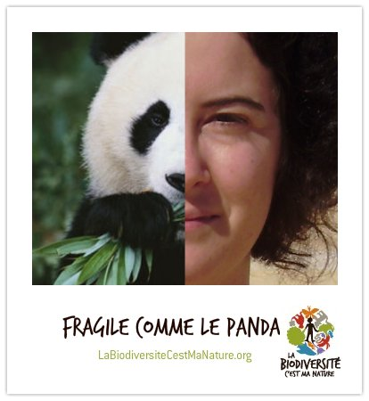 panda-bio