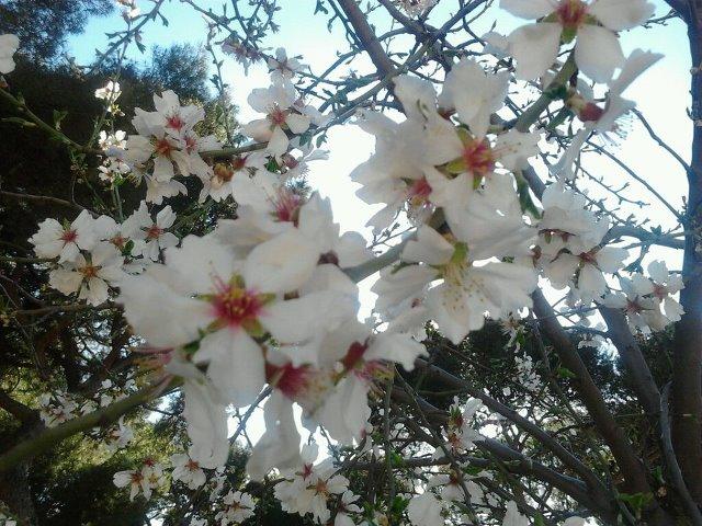 Flores en la Dehesa